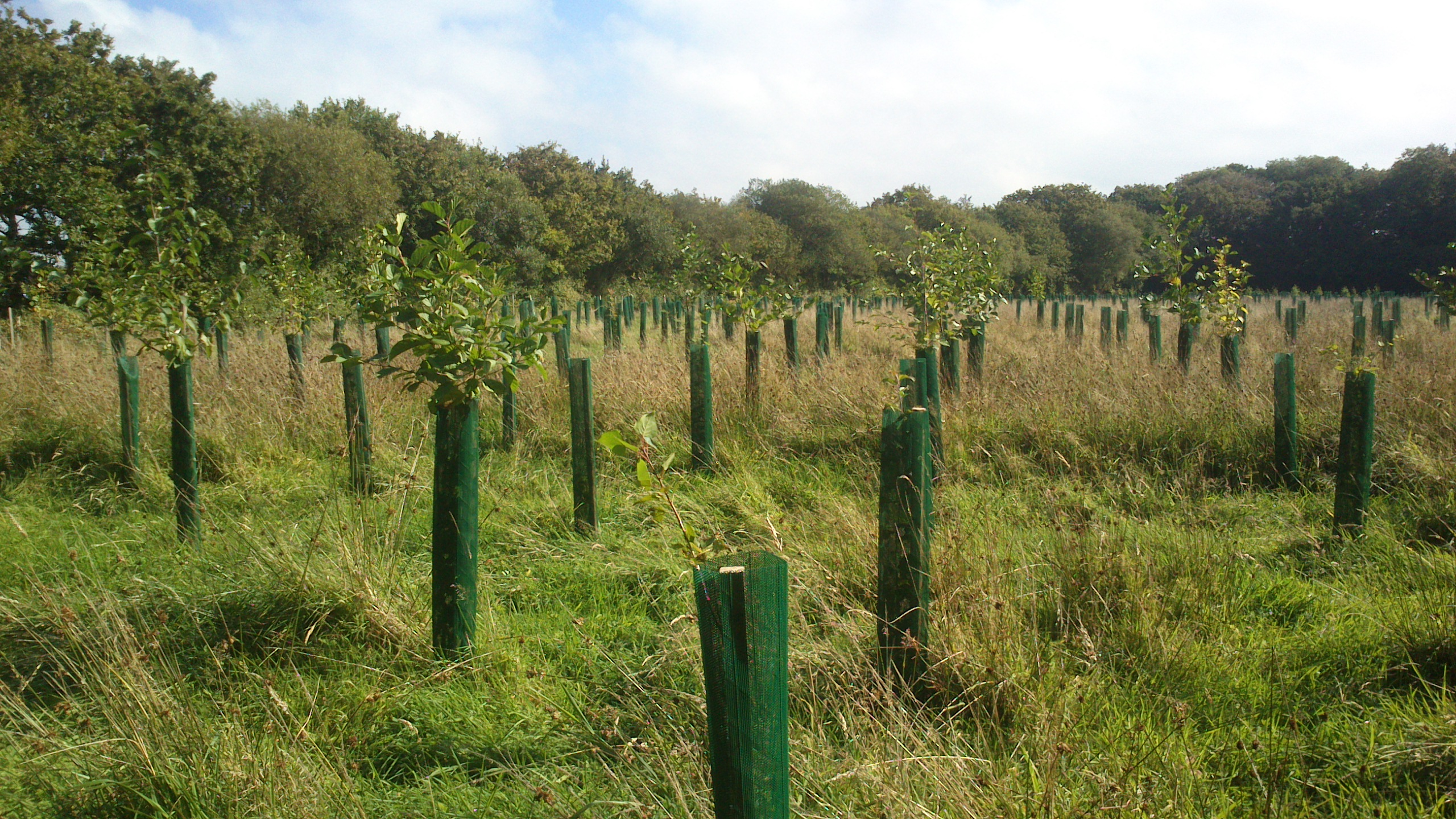 New Woodland Planting near Petrockstowe, Devon