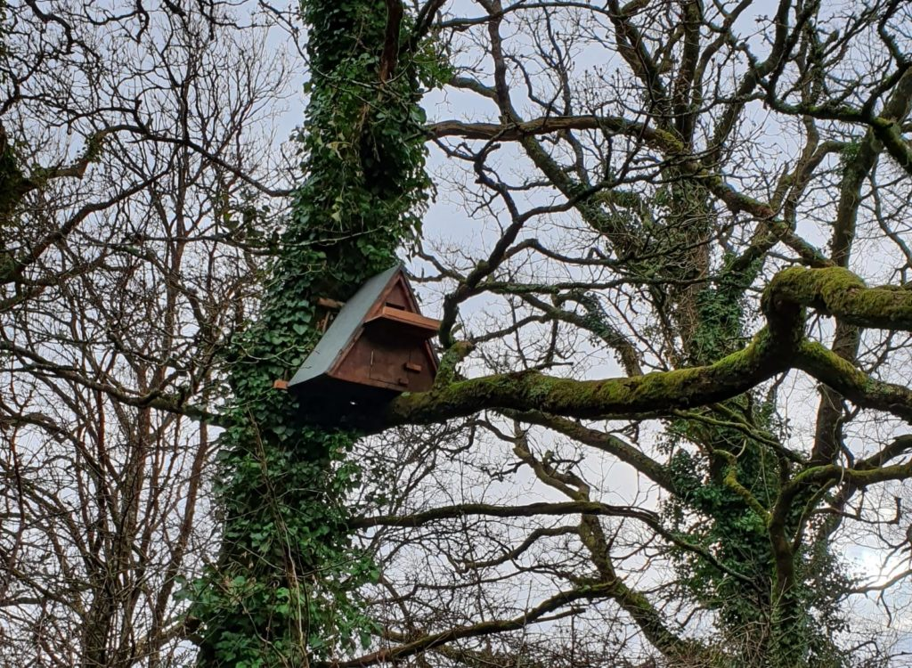 Barn Owl Box in Tree