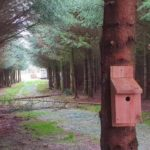 Bird box in Spruce Plantation Ride