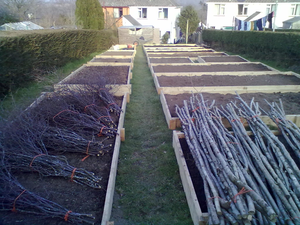 Raised beds, bean poles and pea sticks